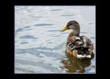 Pretty Boy by tigger3, Photography->Birds gallery