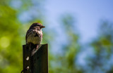 My Post for the Moment by Pistos, photography->birds gallery