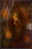 Spider In The 'Spotlights' by corngrowth, photography->macro gallery
