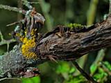 Lichen by biffobear, photography->nature gallery