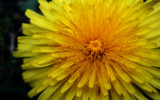 Bright! by braces, photography->flowers gallery