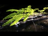 Maidenhair Fern by mayne, Photography->Nature gallery
