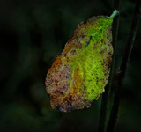 Just a leaf by biffobear, photography->nature gallery
