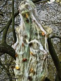 Wood Spook by Dunstickin, photography->still life gallery
