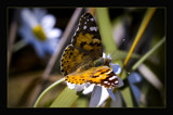 butterfly by JQ, Photography->Butterflies gallery