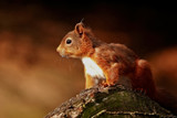 Red's back In town by biffobear, photography->animals gallery