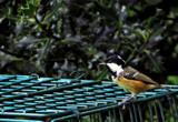 Tit Test by biffobear, photography->birds gallery