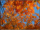 Canopy of Color by wheedance, Photography->Nature gallery