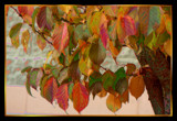Autumn Jewels by verenabloo, Photography->Manipulation gallery