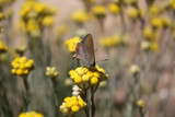 Butterfly Ignoring the Rule of Thirds by drbasil, Photography->Butterflies gallery