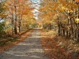 Fall Trail by ebjo, Photography->Landscape gallery