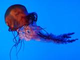 Encore by wheedance, Photography->Underwater gallery