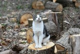 The King Of The Wood Pile by tigger3, photography->pets gallery