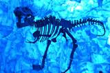 """Tyrannosaurus Rex"" Downtown Disney by icedancer, photography->animals gallery"