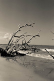 Escape in Death by aboogie, photography->shorelines gallery