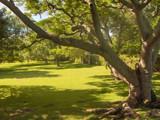 Bermudian Park by iamkas, Photography->Landscape gallery