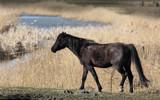 Horse by Paul_Gerritsen, photography->animals gallery