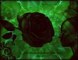 The Black Rose by mesmerized, photography->manipulation gallery