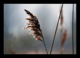 Sunlit Grass by JQ, Photography->Nature gallery