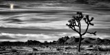 Joshua Tree by snapshooter87, photography->manipulation gallery