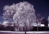IR Test by biffobear, photography->general gallery
