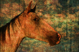 Horse Hide Textures by 0930_23, photography->animals gallery