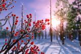 Winterberry in Ice by Akeraios, computer->landscape gallery