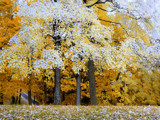 Broken Heart Autumn by jojomercury, Photography->Landscape gallery
