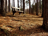 Bench and Pine Needles by suitsandshoes, Photography->Landscape gallery