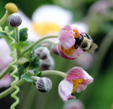 Busy by Pistos, photography->flowers gallery