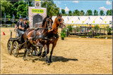 Nobility 09 by corngrowth, photography->action or motion gallery