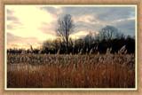 Zeeland Dawn 02 by corngrowth, Photography->Landscape gallery