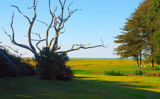 totally amazing tree by solita17, Photography->Landscape gallery