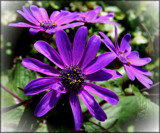 Purple by LynEve, photography->flowers gallery
