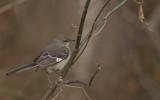 sshhhhh or it will fly by RBanerji, photography->birds gallery