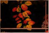 Russet by biffobear, photography->manipulation gallery