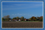 Zeeland Countryside (43), Tiny Village by corngrowth, Photography->Landscape gallery