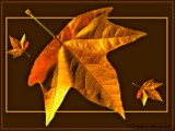 Leaves by Dunstickin, photography->manipulation gallery
