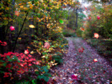 When Autumn Leaves Start to Fall by cynlee, photography->manipulation gallery