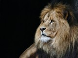 The King by Paul_Gerritsen, Photography->Animals gallery