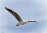 Flight by LynEve, Photography->Birds gallery