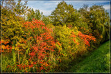 Mother Nature's Fall 'Painting' 2 by corngrowth, photography->nature gallery