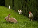 Farm-back-yard Animals by trisweb, Photography->Animals gallery