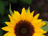 Here Comes the Sun by wheedance, Photography->Flowers gallery