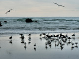 Sumner Beach #1 by LynEve, Photography->Shorelines gallery