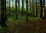A Walk by biffobear, photography->landscape gallery