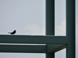 Little Bird by Starglow, contests->b/w challenge gallery