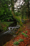 Babbling Brook by biffobear, photography->landscape gallery