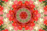 Ring-a-Ring o' Roses by LynEve, photography->manipulation gallery