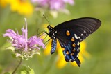 The Delicate Sound of Nature by egggray, Photography->Butterflies gallery